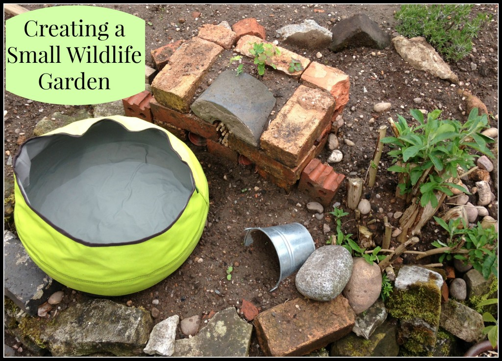 creating a small wildlife garden