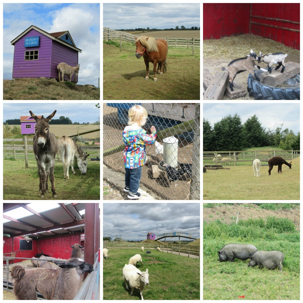 Twinlakes farm animals