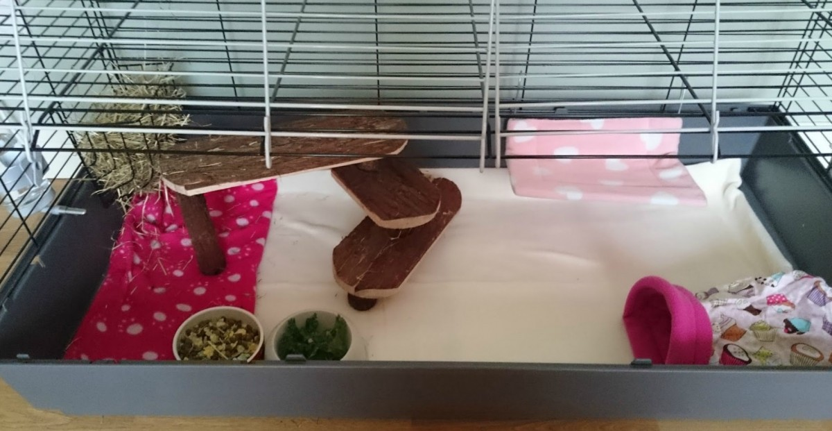 guinea pig cage set up