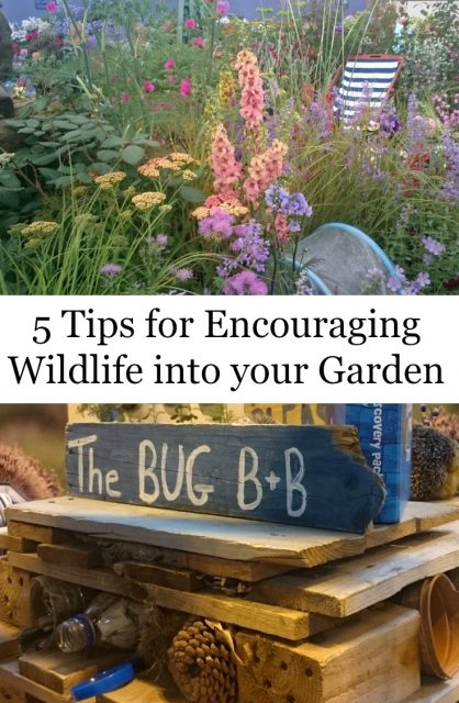5 Tips for Encouraging Wildlife into Your Garden