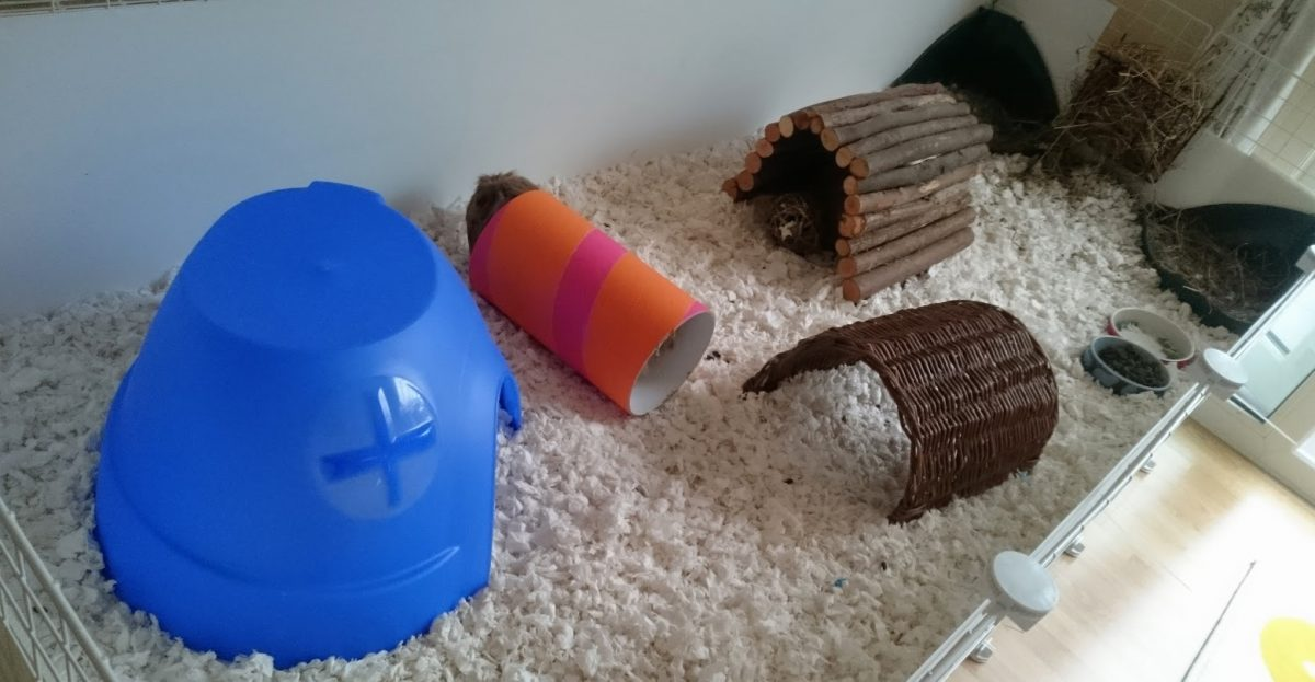 new-guinea-pig-cage