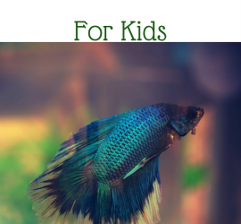 Why A Betta Fish Is The Perfect First Pet For Kids